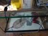 Simulacrum-22-4-2012-008